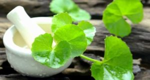 brahmi for hair loss